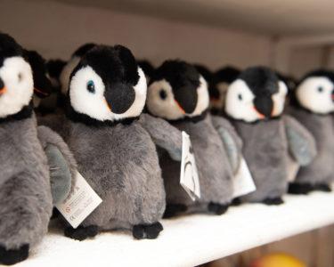 Boulders Beach Hotel Penguin Shop