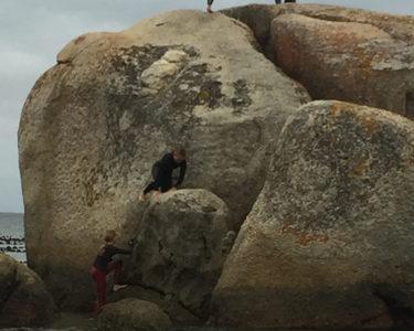Boulders Beach Experience